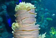 An Aquarium Wedding Cake by A Piece of Cake